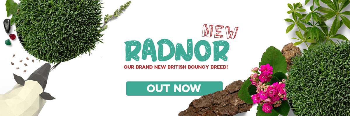 Radnor British Breed